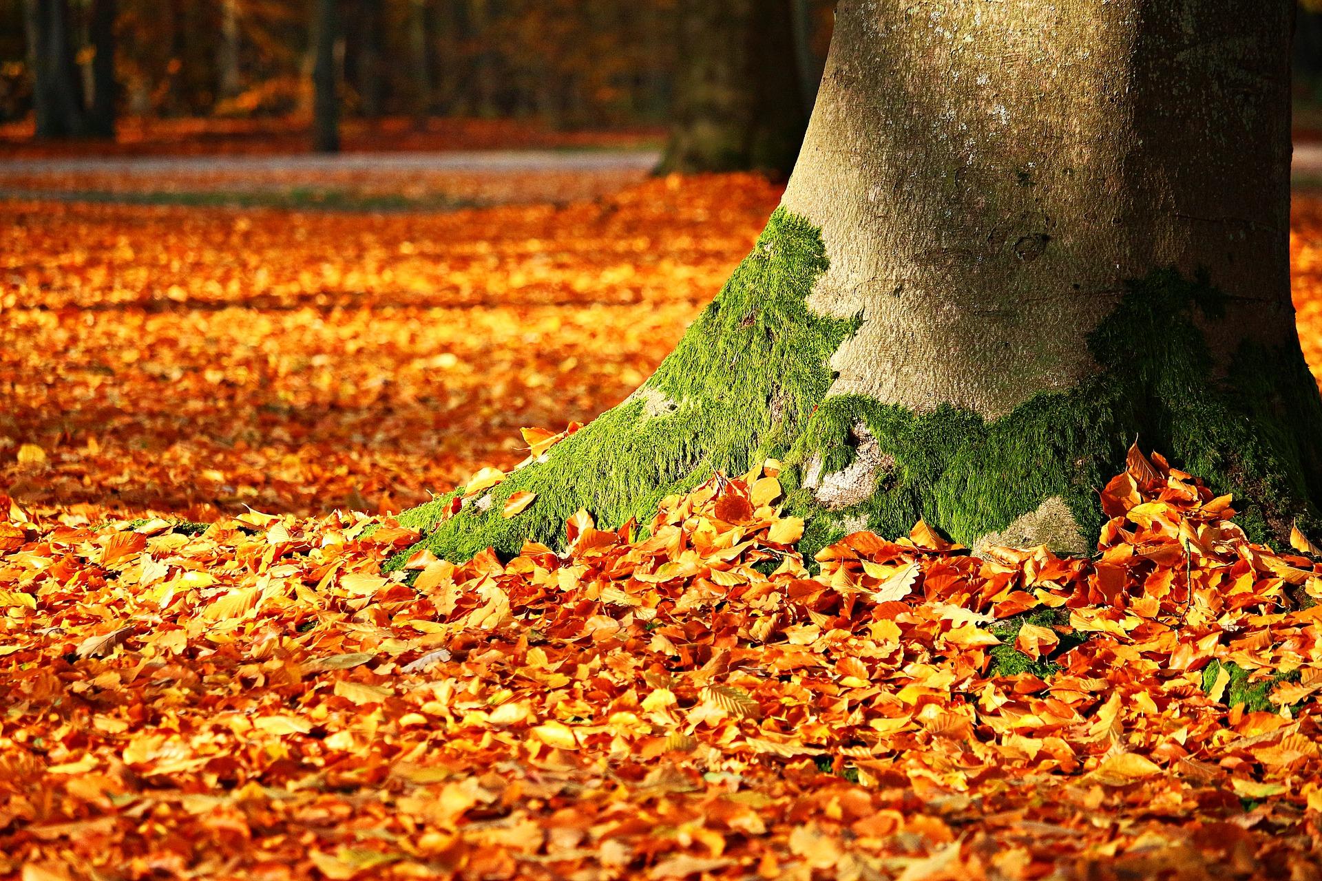 fall-foliage-1913485_1920