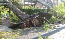 tree-14340_640